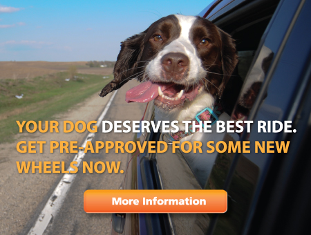 Your dog deserves the best ride. Get Pre-Approved for some new wheels now. More Information. Includes a photo of a dog sticking his head out the window.